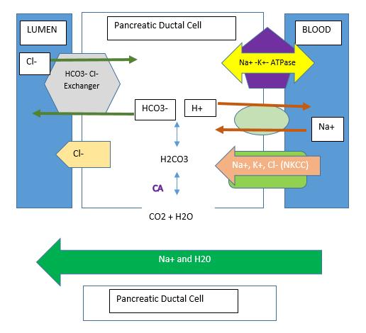 enzymes present in pancreatic juice
