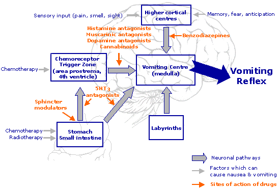 Fig 2 - The pathways and neurotransmitters involved in the control of vomiting.