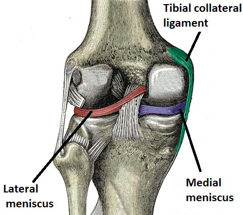 Examination Of The Knee Joint Teachmesurgery