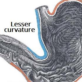 Peptic Ulcer Disease Gastric Duodenal Teachmesurgery
