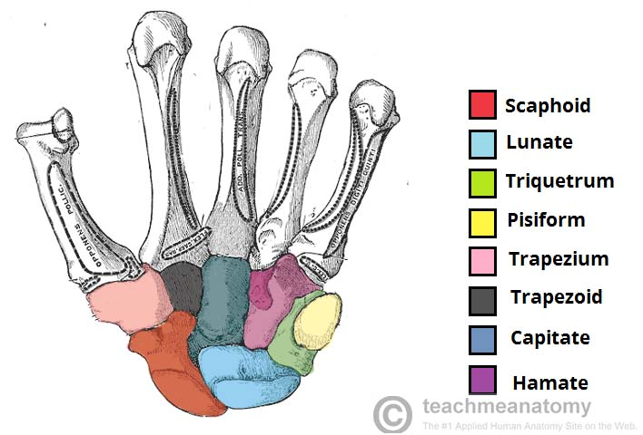 Scaphoid Fractures Teachmesurgery