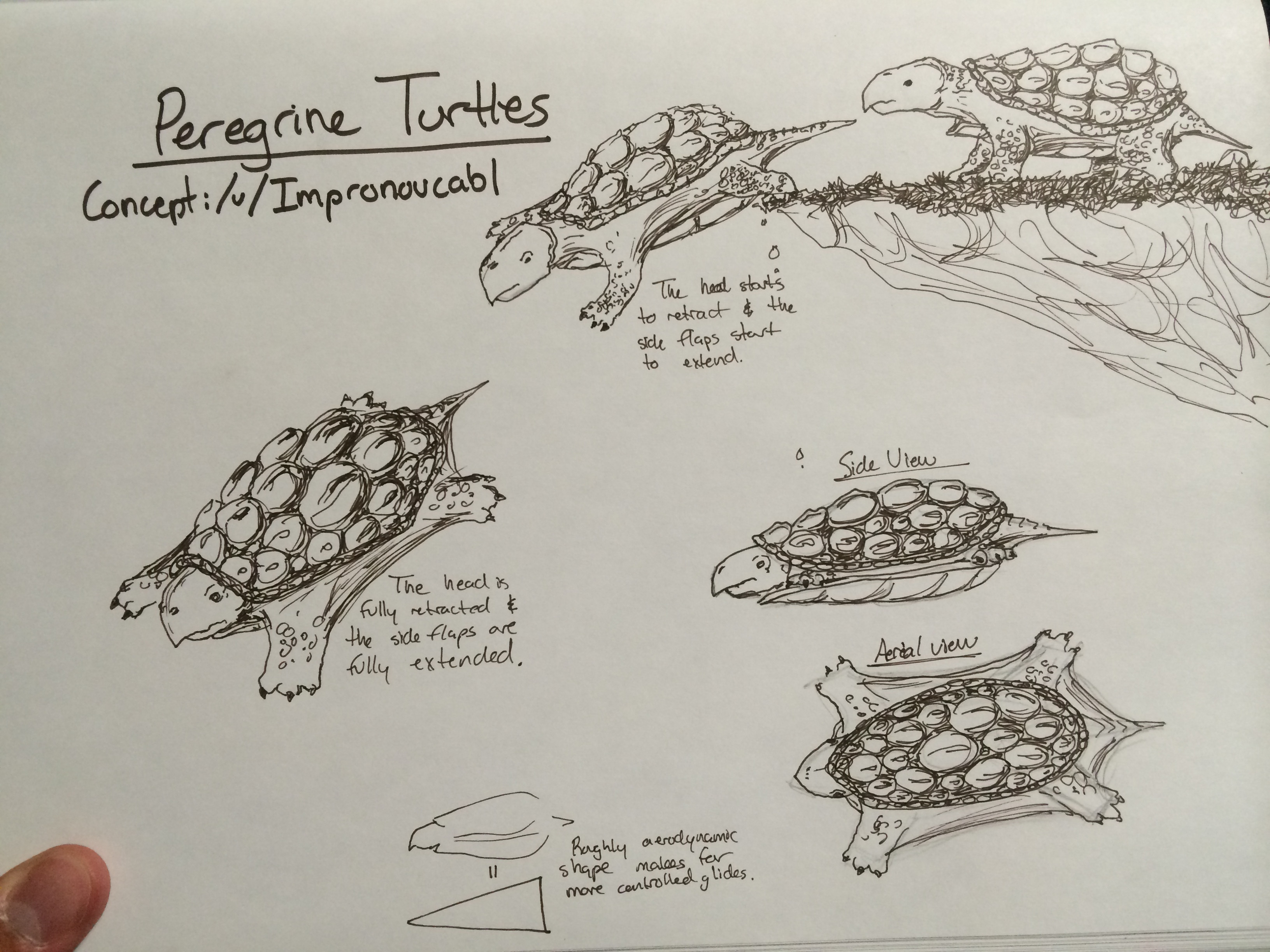 Peregrine turtles by tanmanvincent