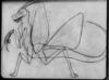 Mantis scan
