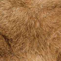 Fur and Feathers Category