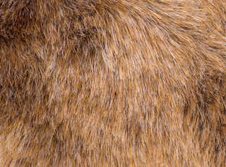 Fur and feathers 0014