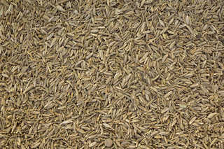 Grains and seeds 0013