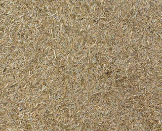 Grains and seeds 0015
