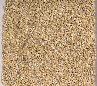 Grains and seeds 0021