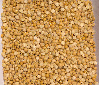 Grains and seeds 0023