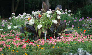 Gardens and flower beds 0030