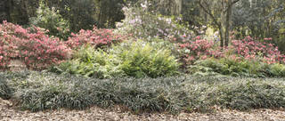 Gardens and flower beds 0053