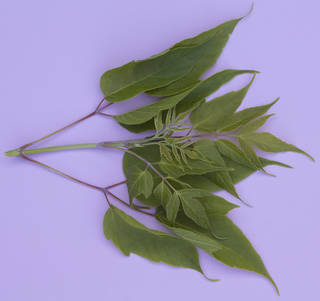 Leaves bunches 0022