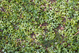 Shrubs and bushes 0002