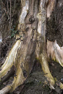 Tree roots and stumps 0001