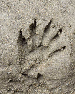 Footprints and animal tracks 0009
