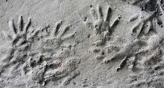 Footprints and animal tracks 0011