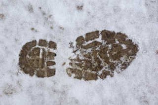 Footprints and animal tracks 0031