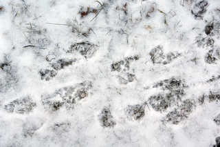 Footprints and animal tracks 0032