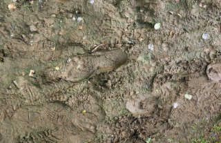Footprints and animal tracks 0038