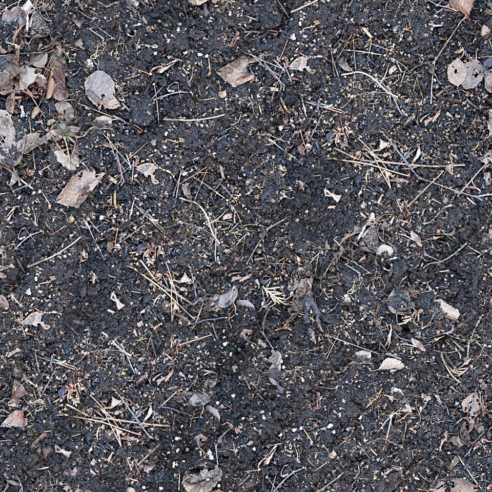 Forest Floor Terrain 0001 | TextureMax Dark Forest Floor Texture