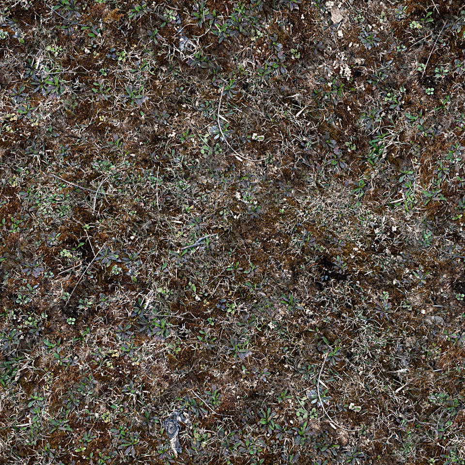 Forest Floor Terrain 0010 | TextureMax Dark Forest Floor Texture