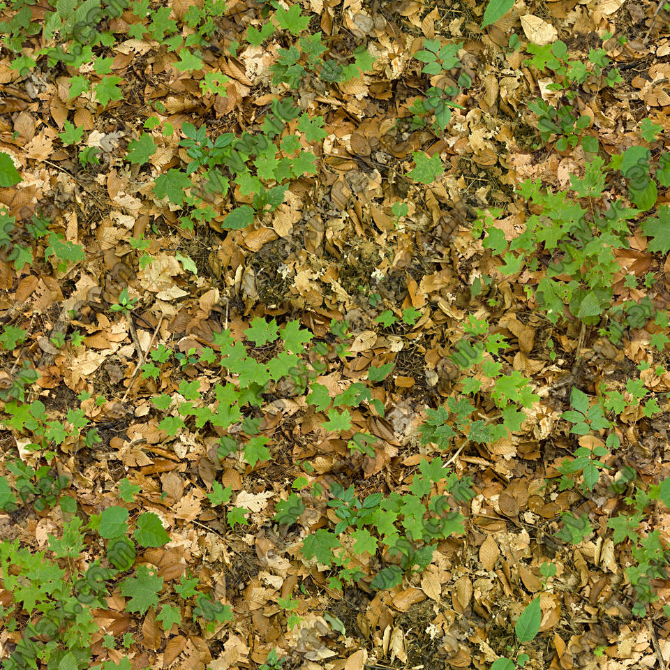 The gallery for --> Seamless Forest Ground Texture Dark Forest Floor Texture