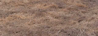 Grass and straw terrain 0014