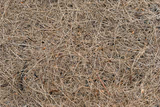 Grass and straw terrain 0017
