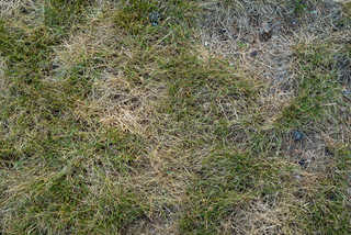 Grass and straw terrain 0027