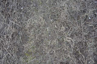 Grass and straw terrain 0047