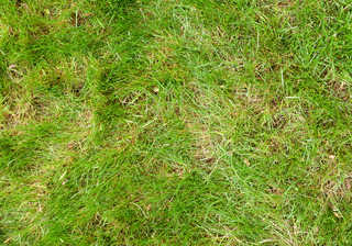 Grass and straw terrain 0052