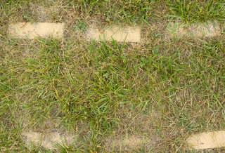 Grass and straw terrain 0056