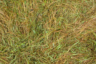 Grass and straw terrain 0060