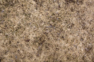 Grass and straw terrain 0069