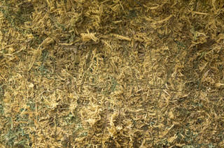 Grass and straw terrain 0073