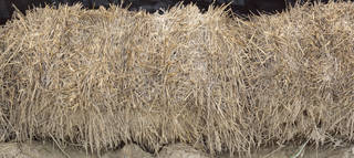 Hay and straw 0014