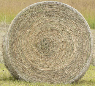 Hay and straw 0016