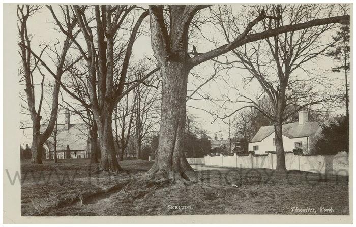 Postcard front: Skelton