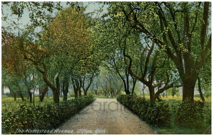 Postcard front: The Homestead Avenue, Clifton, York
