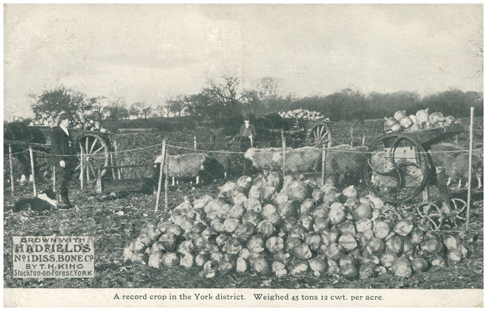 Postcard front: A record crop in the York district. Weighted 45 tons 12 cwt. per acre
