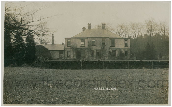 Postcard front: Hazel Bush