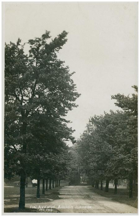 Postcard front: The Avenue Askham Richard