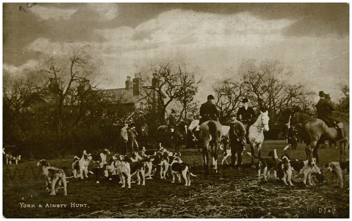 Postcard front: York & Ainsty Hunt
