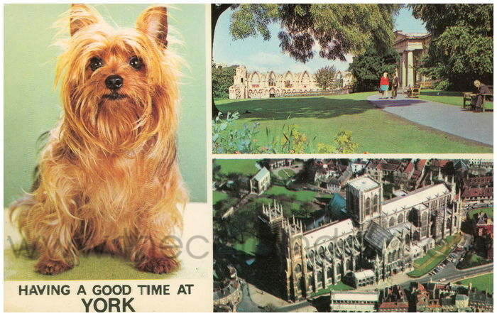 Postcard front: Having a Good Time at York