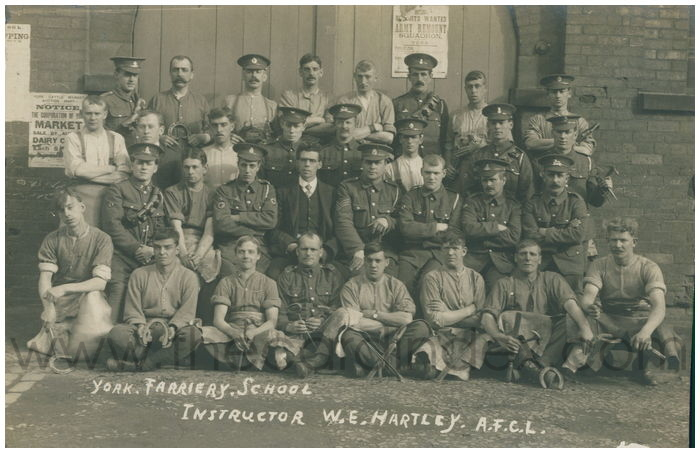 Postcard front: York. Farriery. School Instructor W.E. Hartley. A.F.C.L.