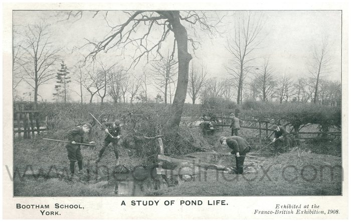 Postcard front: Bootham School York  A study of Pond Life