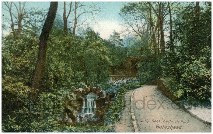 Postcard front: The Dene, Saltwell Park, Gateshead