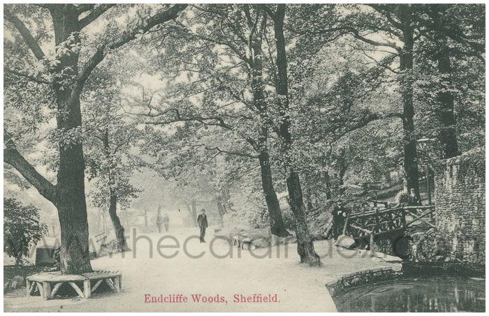 Postcard front: Endcliffe Woods, Sheffield