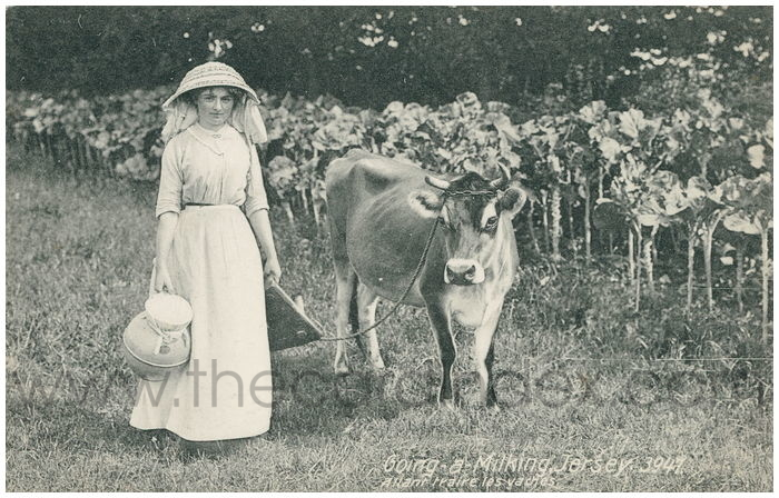 Postcard front: Going-a-Milking, Jersey.