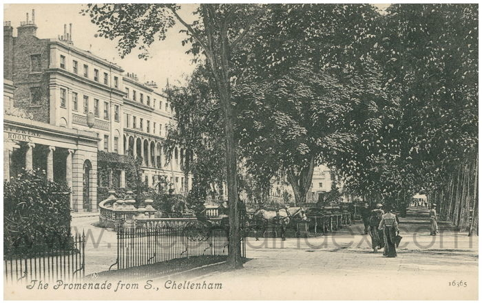 Postcard front: The Promenade from S., Cheltenham